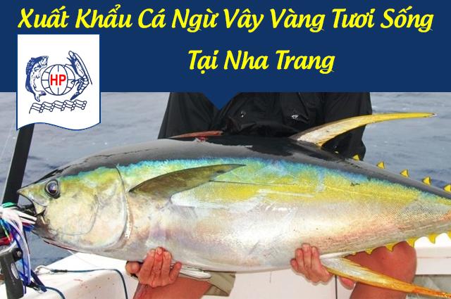 Xuất Khẩu Cá Ngừ Vây Vàng Tươi Sống Tại Nha Trang